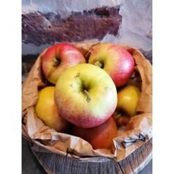 Pommes Pinova - Kg